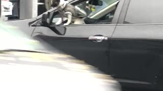 Dog grey sweater window of car - Video