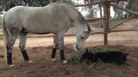 Man's Best Friend Indulges in Horseplay With His Unusual BFF