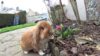 Cute little Pimousse found the only flower in the garden  - Video
