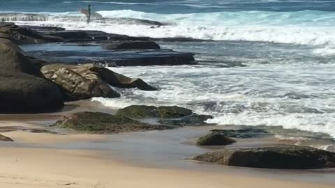 Kid with surf board on rocks waves hits him and he falls