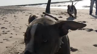 Bullies on the beach - Video