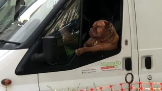 Dog Just Lounging on the Job - Video