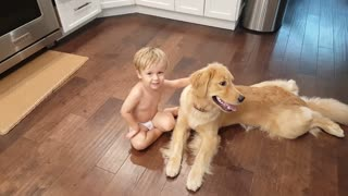 Gentle Golden Retriever lets toddler pull on tongue