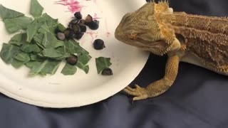 lizard is eating some oleaves and grass