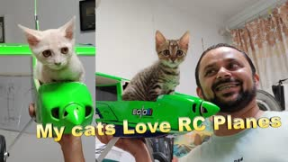 My Kitten Loves a Ride in my RC airplane