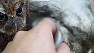 Adorable bunny and baby owl together - Video