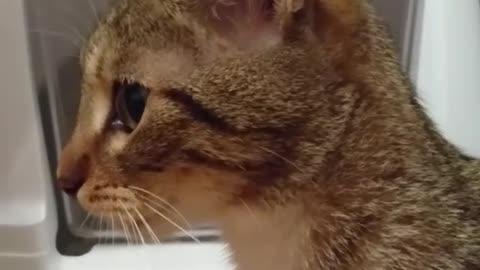 A kitten is stuck inside her new litter box. Wait until you see who rescues her!