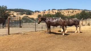Horses Have a Blast Playing With Outdoor Sprinkler - Video