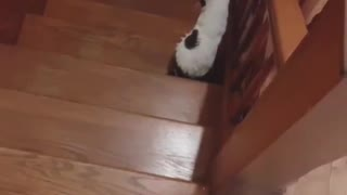 Deaf Cat Adorably Reacts to Owner's Shadow