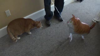 Cat and cat toy - Video