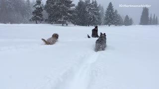 Two dogs running through snow in slow motion