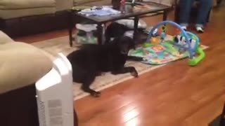 Obedient Dog Helps With Nappy Changing By Fetching Diapers - Video