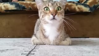 Cat Watches Horror Movie - Video