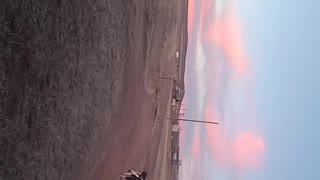 Standard Poodle Retrieving in Wyoming