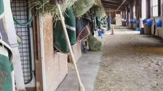 Horses Uses Broom To Sweep Hay Into His Stall - Video