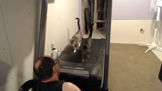 Cats on Treadmill - Video