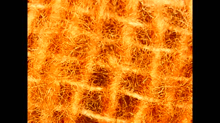 microscopic view of a piece of cotton