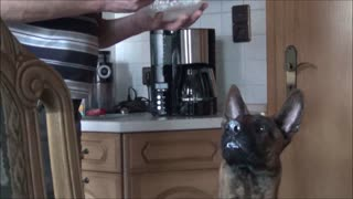 Dog is crazy about quark  - Video