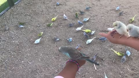 Little girls get covered with friendly birds
