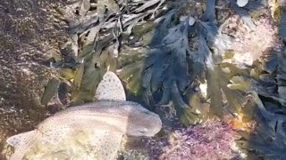 Instant Bond Formed While Saving a Stranded Fish