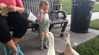 Duck takes bread out of little boys hand ow