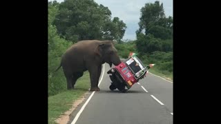 Elephant Tips Over Tuk Tuk in Search of Food - Video
