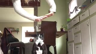 Cat Does Trick Like Dog - Video