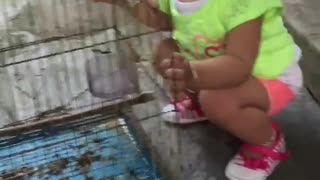 Baby girl first saw the bird very lovely  - Video