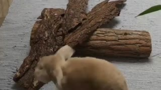 Rabbits Are Playing At Home. - Video