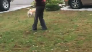 Girl in red wig chases dog with toy gun