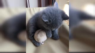 Cute and Funny Cat Videos Compilation #2