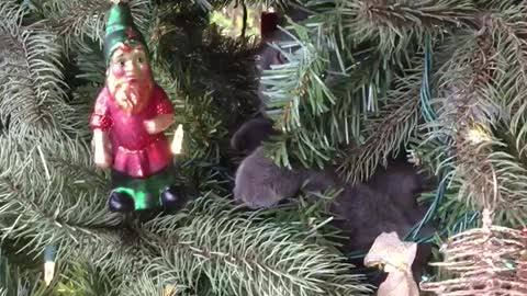 Cat fights the Christmas decorations