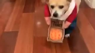 Dog dressed as pizza delivery man