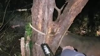 Rescuing a Deer With a Chainsaw - Video