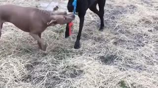 Slow motion tug-o-war