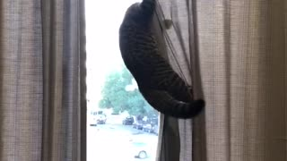 Mission Impossible Cat 😸