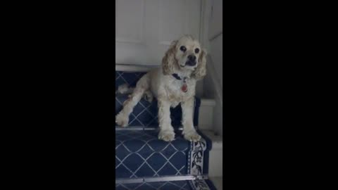 Stubborn dog adorably refuses to let his owner go out