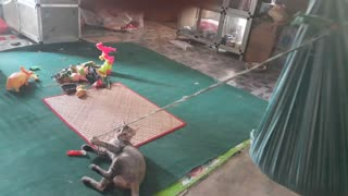 Cat Swings Kid to Sleep