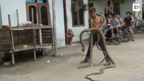 Snake Charmer Carries 13 Foot Cobra Around Neck
