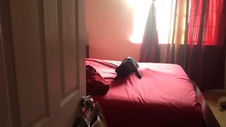 Cat above bed sheet fights cat underneath sheet - Video