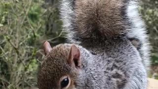 Sweet little Squirrel came to visit
