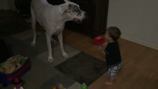 Great Dane shows toddler some dance moves - Video