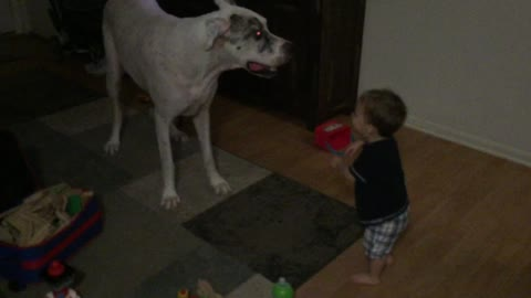 Great Dane shows toddler some dance moves