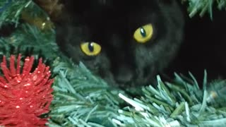 Black Cat Becomes Christmas Tree Ornament