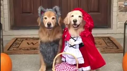 Little red riding hood and the hecking bad wolf