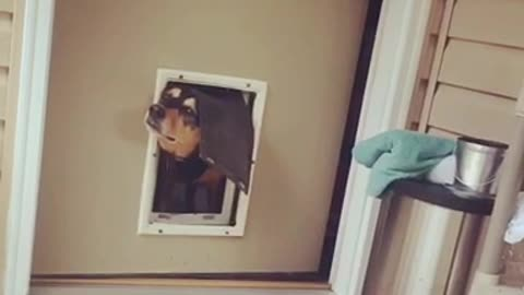 Black dog head in doggy door