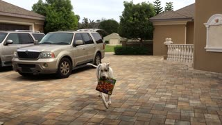 Introducing Max the Pizza Delivery Dog! - Video