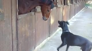 Horse and Great Dane share incredible playtime moment - Video