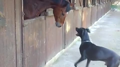 Horse and Great Dane share incredible playtime moment