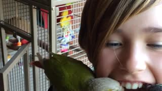 Bird Grooming Her Owner Steals A Loose Tooth